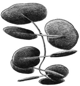 Art drawing of Botanica sound absorving panels by Mario Trimarchi in black ink on white paper.