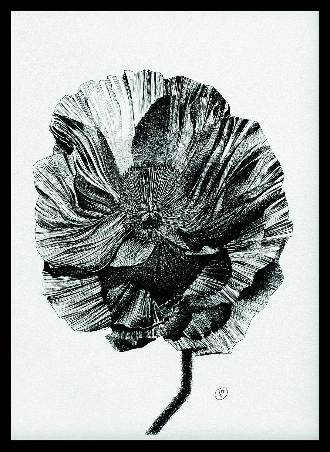 Papavero_Poster_Ink on Paper_Mario Trimarchi Design5
