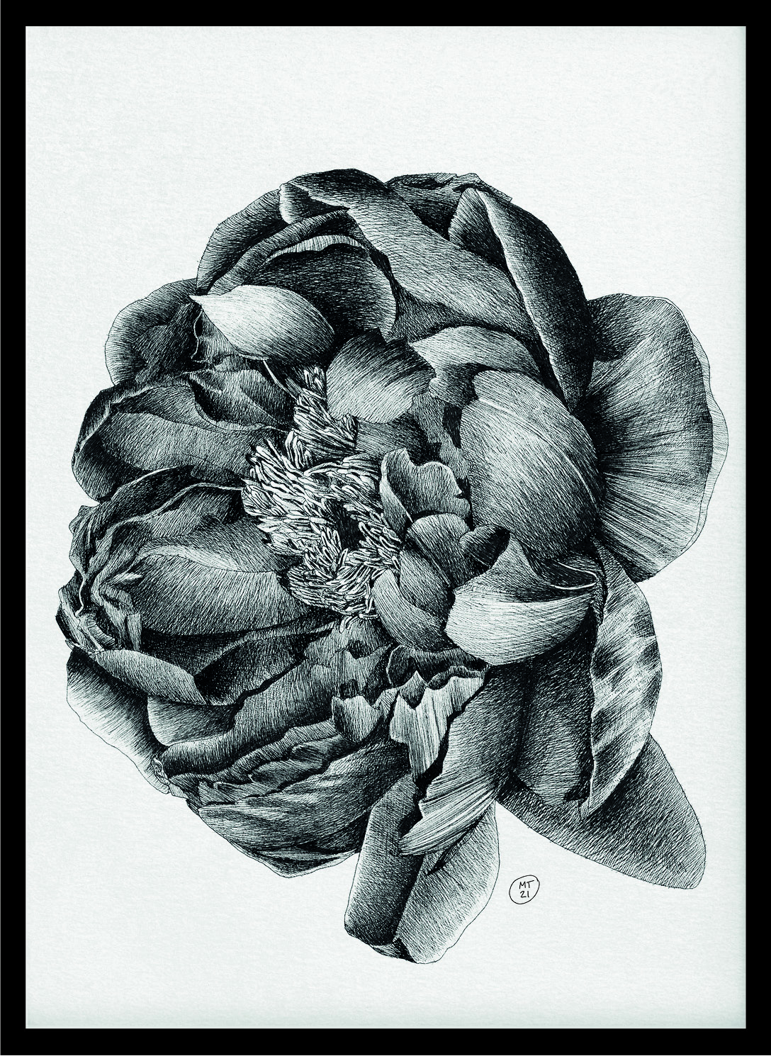 Peonia_Poster_Ink on Paper_Mario Trimarchi Design6